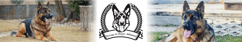 Elevage de Berger