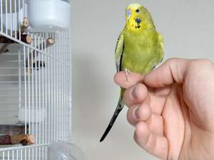 Perish birds  - Birds on Aster Vender