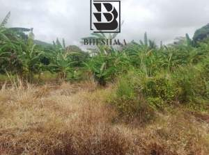 50 perches Royal Road Clemencia @Rs 85,000/perche - Land on Aster Vender