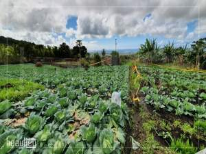 Agricultural land of 33 perches is for sale in Pont Bondieu