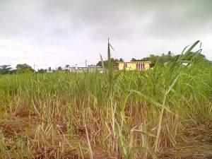 Land at Gokhoola - Land on Aster Vender