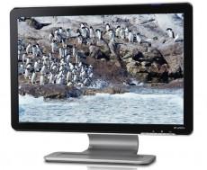 HP Monitor 19