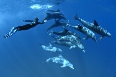 Visit Ile aux Bénitiers at Rs1800 per person watch and swim with dolph - Tourism on Aster Vender
