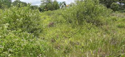 Bare residential land of 33 perches at Phoenix, Mesnil.  - Land on Aster Vender