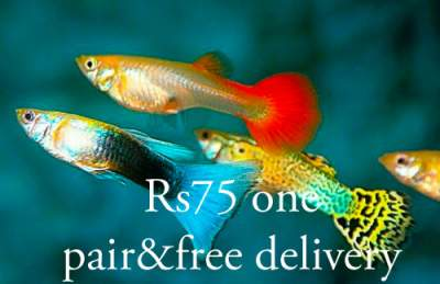 Fish multicolor - Other Pets on Aster Vender
