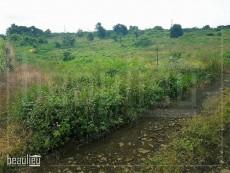 1 arpent agricultural land in Nouvelle Découverte - Land on Aster Vender