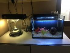 Aquarium Fish for sale in Mauritius | Aster Vender Pets