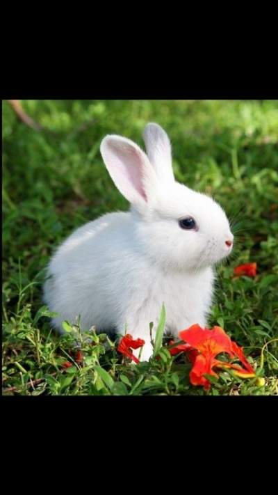 Rabbit - Rabbits on Aster Vender