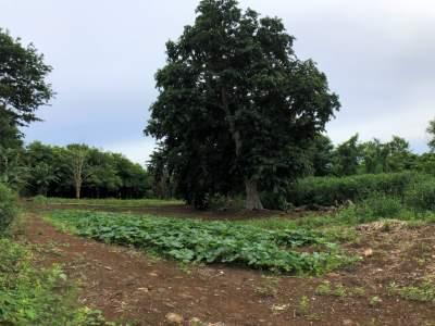 Agricultural land 4302.42 m2 – Pamplemousses - Land on Aster Vender