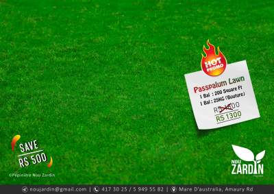 Passpalum Lawn Promo - Plants and Trees on Aster Vender