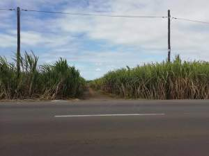 agricultural land is for sale at Laventure @ Rs4,300,000 negotiable.  - Land on Aster Vender