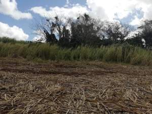 25 perches residential land at Jankee Road, Gokoola at Rs 85,000 /perc