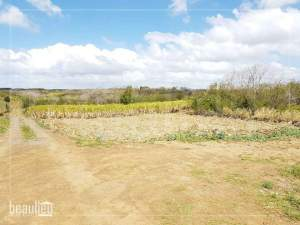 26 Perches Residential land,  Grand Baie - Land on Aster Vender