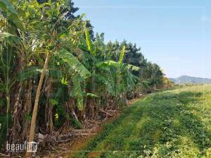 *** 1 Arpent 1 perche Agricultural Land in New Grove, Deux Bras ***