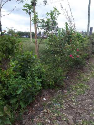 Residential land for sale  - Land on Aster Vender