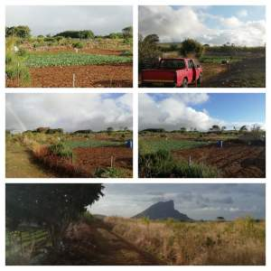 1 A 50 P Agricultural in Hollywood, Vacoas.  - Land on Aster Vender