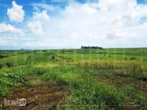 Agricultural land of 48 perches in Bois Mangues,Plaines Des Papayes