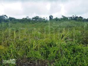 Residential land of 18.64 perches in Camp Thorel