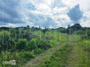 45,5 Perches Agricultural land for sale in Bois d'Oiseaux  - Land on Aster Vender