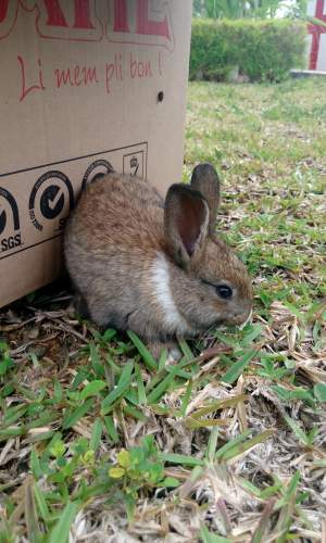 Lapin a vendre - Rabbits on Aster Vender
