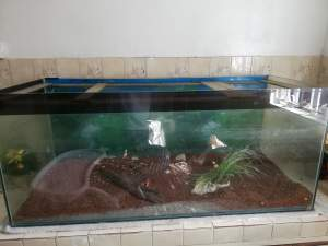 Aquarium 1.5 x 4 feet  -  Aquarium fish on Aster Vender
