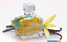 frederic m - Perfume on Aster Vender