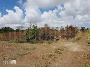 40 perches Agricultural Land in Reunion Maurel,Petit Raffray  - Land on Aster Vender
