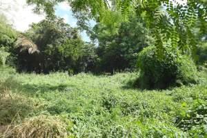 Terrain a vendre a rivière noire  - Land on Aster Vender