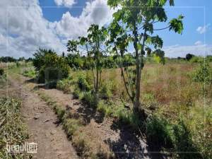 Agricultural land of 50 perches is for sale in Poste De Flacq - Land on Aster Vender