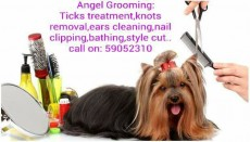 Toilettage pour animaux(pet grooming )... - Services for pets on Aster Vender