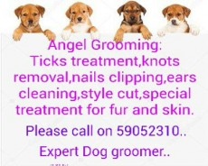 Toilettage pour animaux(pet grooming) - Services for pets on Aster Vender
