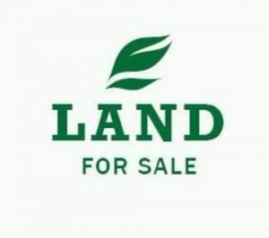 5p @ Oillier Q Bornes - Land on Aster Vender