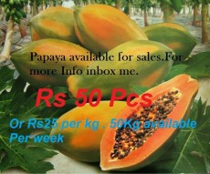 Papaya available for sale every week - Fruits on Aster Vender