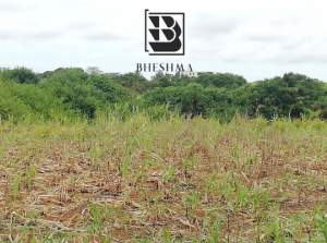 Agricultural plot in Royal Road. Can be converted into residential.  - Land on Aster Vender