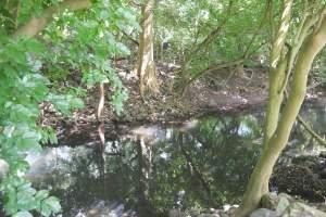 Terrain résidentiel à l'entrée des gorges de Rivière Noire - Land on Aster Vender