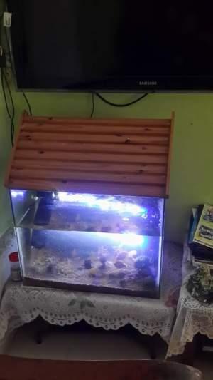 Aquarium 58×47 -  Aquarium fish on Aster Vender
