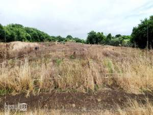 Agricultural land of 80 perches is for sale in Ile D'ambre.  - Land on Aster Vender