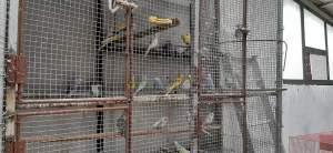 Birds - Birds on Aster Vender