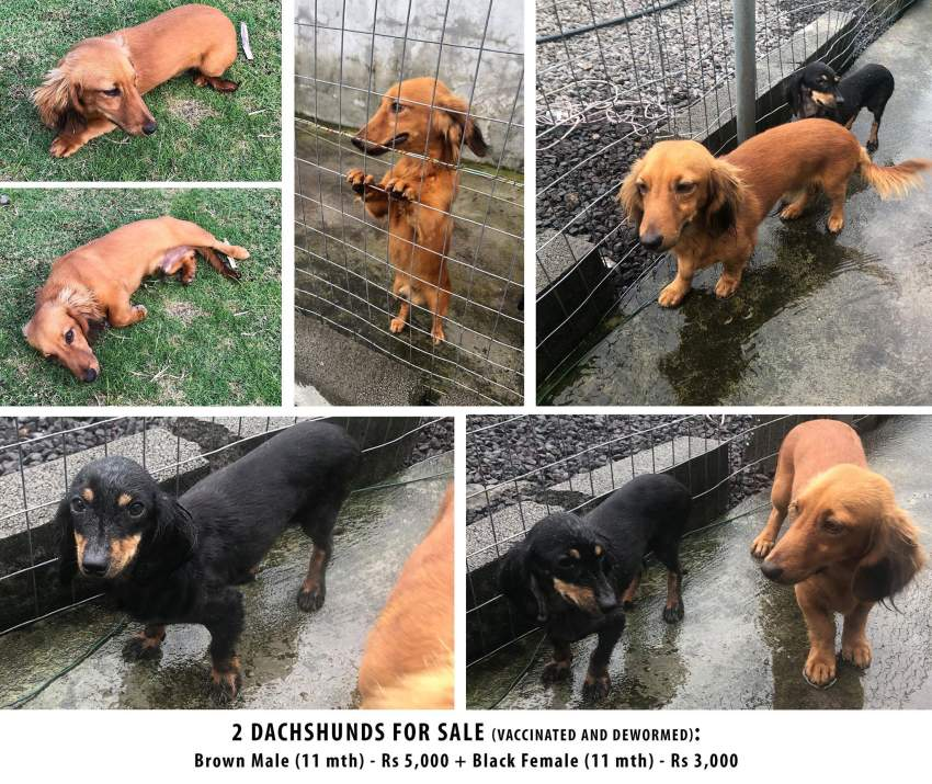 2 dogs for sale