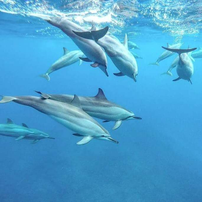 Dolphin watching mauritius