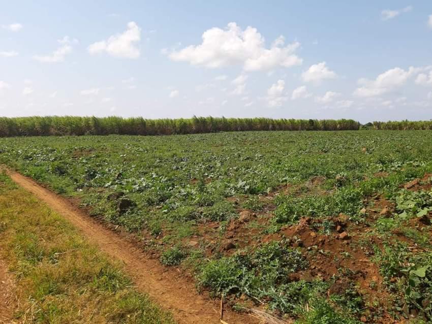 Agricultural Land L'Esperance Piton