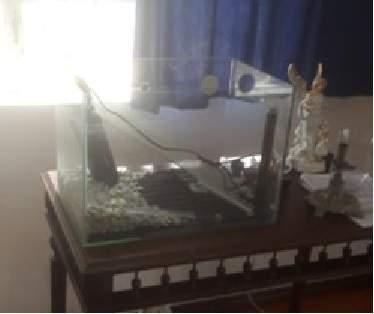aquuarium