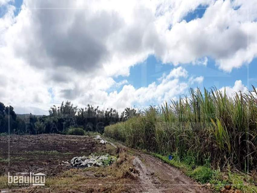 Agricultural land of 2 A in la Flora