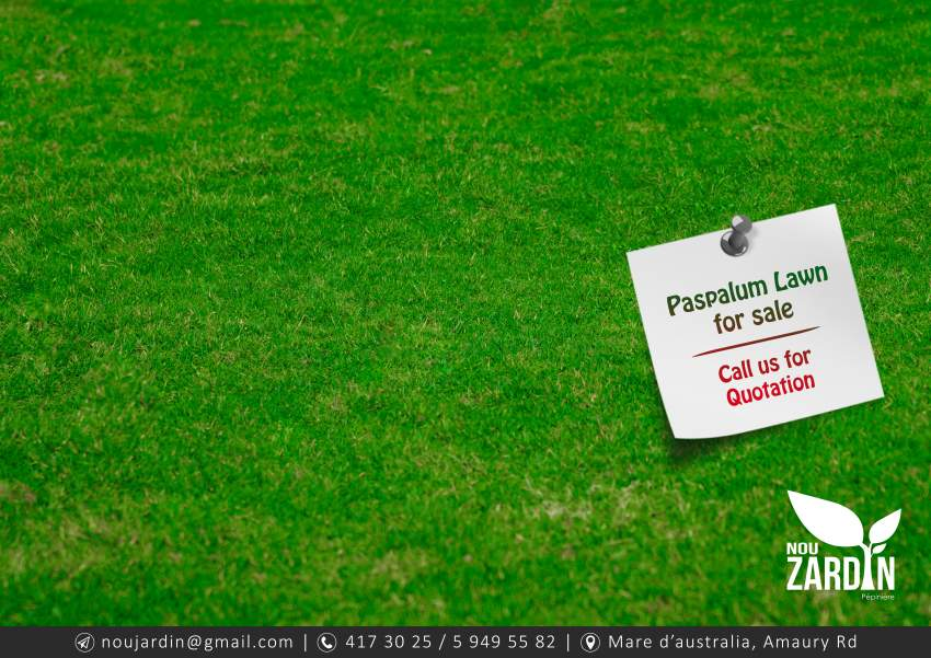 Paspalum Lawn - Plants and Trees at AsterVender