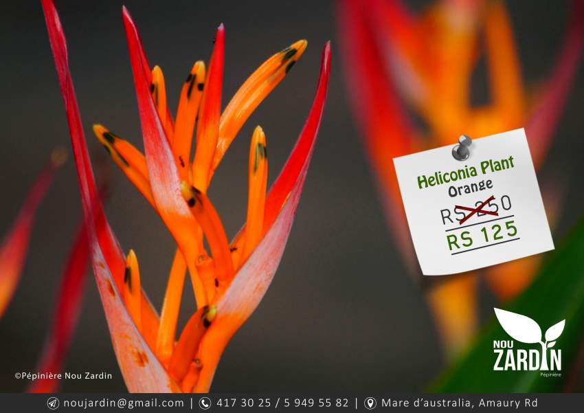 Heliconia Plant - Plants and Trees at AsterVender