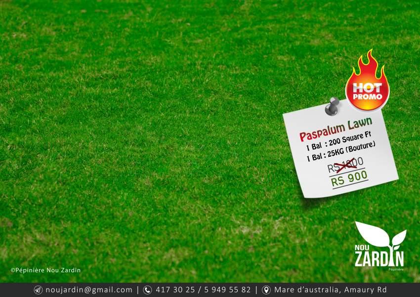 Promo 50% Off - Paspalum Lawn