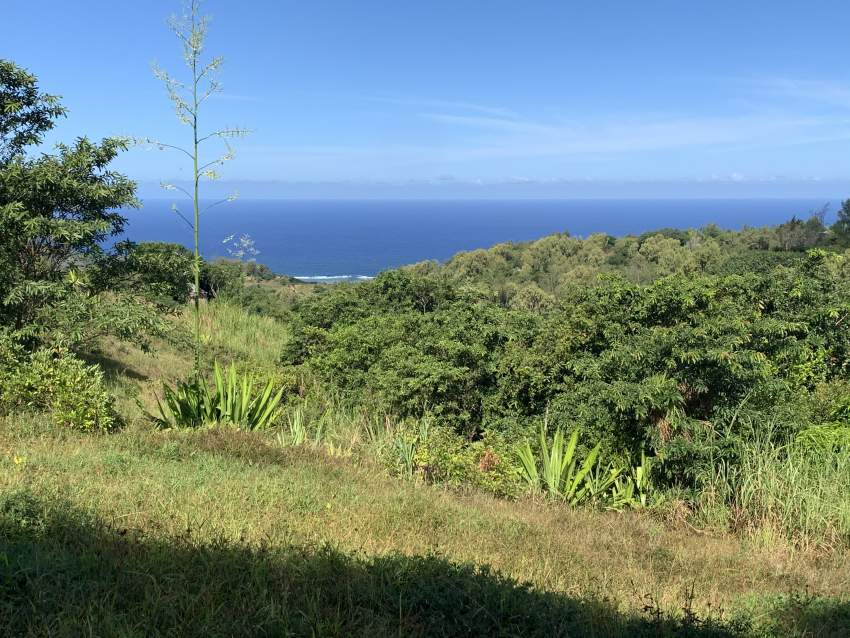 Private land Coromandel Rodrigues