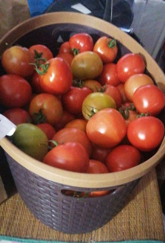 Greenhouse Tomate and Tomatoes
