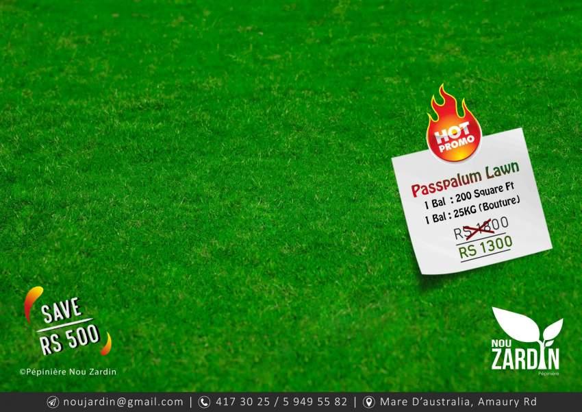 Promo sale- Passpalum Lawn