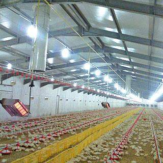 poultry house equipment intallation  - Other services at AsterVender